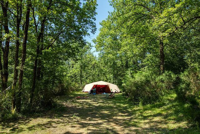 Fiscalou tente en forêt