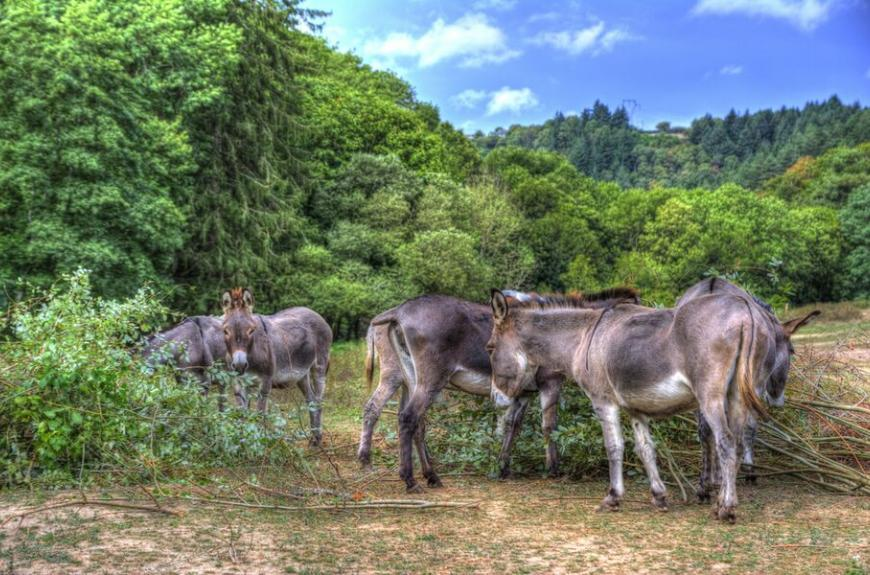 Camping La Bastide d'Albignac ânes